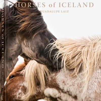 Bog Horses of Iceland