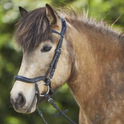 Anatomisk Trense til islandsk hest INCL tøjler