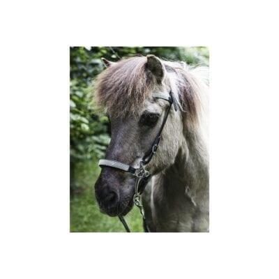 """Hackamore med """"diamanter"""" Nordic Horse"""