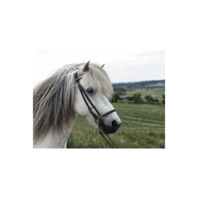 Alm Hannoveransk næserem Nordic Horse